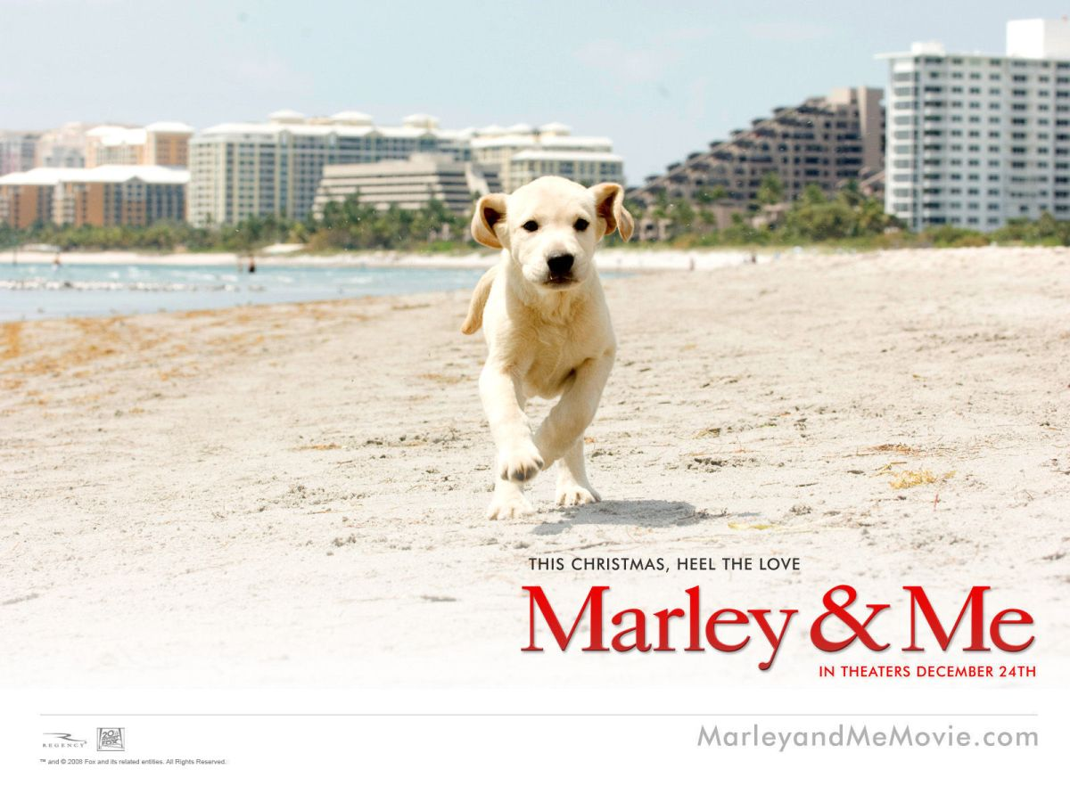book review marley me Free essay: i have never considered that a book about a dog could be so appealing and full of deep thoughts but i changed my viewpoint after reading the.