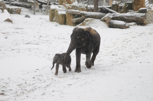 An elephant family in the snow by Natalia Donets